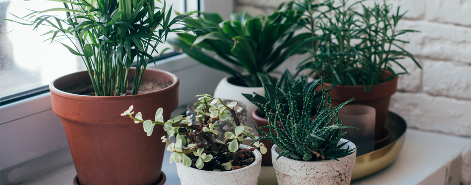 How House Plants Affect Your Home Climate
