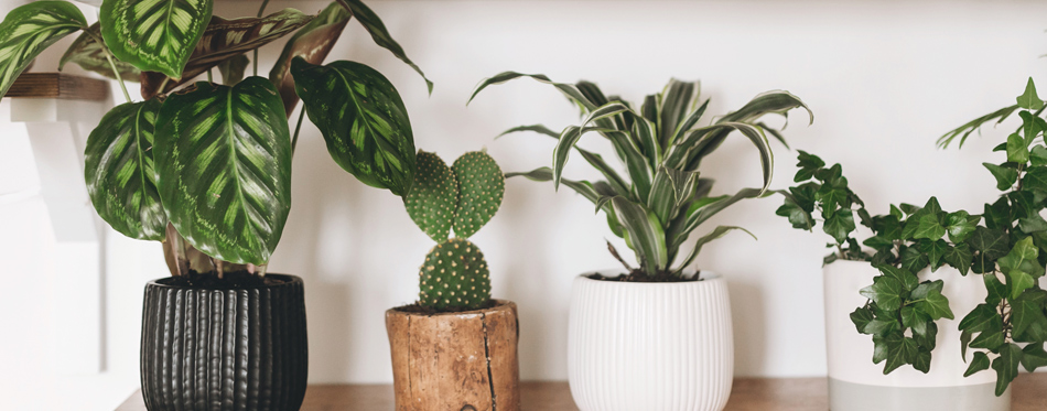 Indoor Plants That Could Improve Your Health
