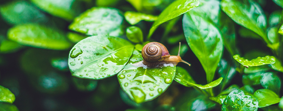 Snail crawling on leaves