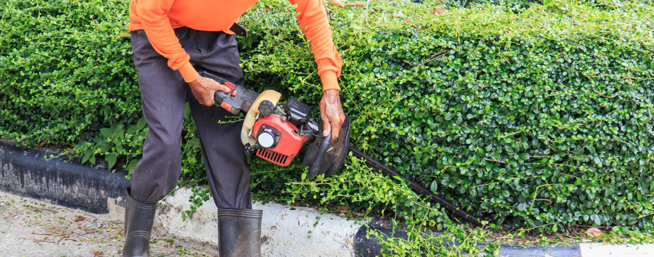 Top Tips For Using An Electric Hedge Trimmer