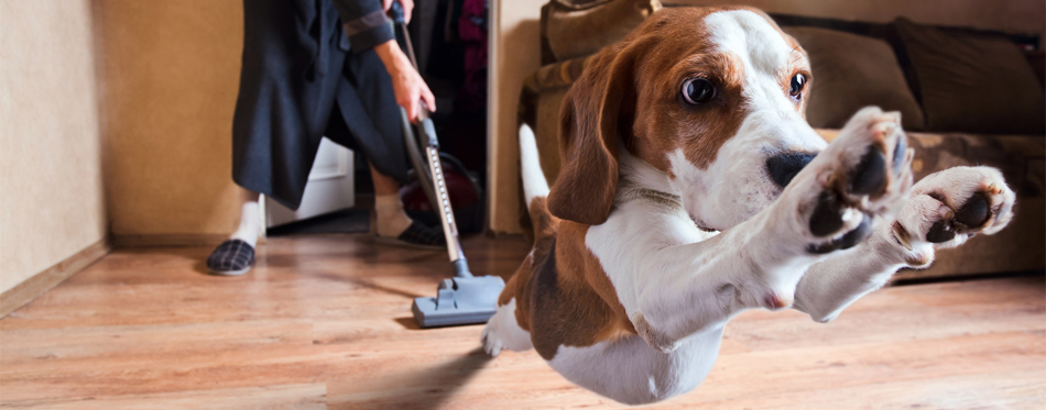 steam cleaning pet